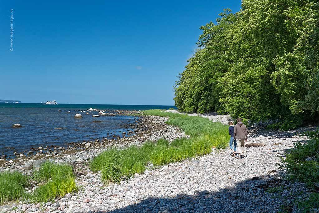 das Umfeld: der Uferwald der Granitz